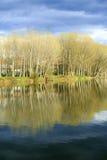 Flod Ter Royaltyfria Bilder