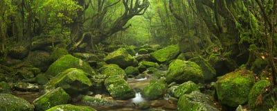 Flod till och med rainforest på den Yakushima ön, Japan Royaltyfri Fotografi