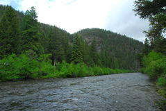 Flod till och med skogen Royaltyfri Bild