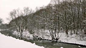 Flod till och med vinterskogen arkivfilmer