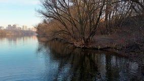 Flod, träd och staden Fotografering för Bildbyråer