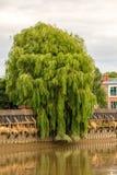 Flod Trent Tree arkivbild