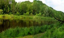 flod ukraine för region för dniprokyivpanorama Arkivbilder