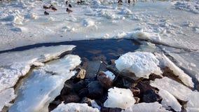 Flod under isen arkivbild