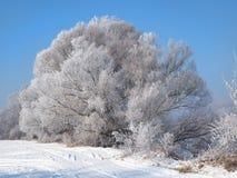 Flod under isen och trädfilialerna som täckas med vit frost Royaltyfri Foto