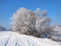 Flod under isen och trädfilialerna som täckas med vit frost Fotografering för Bildbyråer