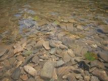Flod vatten, natur för morgon för dagsommargraund Arkivbilder