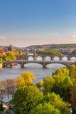 Flod Vltava med broar i Prague, träd i förgrunden, Tjeckien Royaltyfria Foton