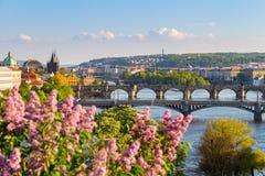Flod Vltava med broar i Prague, träd i förgrunden, Tjeckien Royaltyfri Fotografi