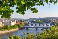 Flod Vltava med broar i Prague, växter i förgrunden, Tjeckien Royaltyfri Bild