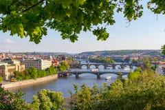 Flod Vltava med broar i Prague, växter i förgrunden, Tjeckien Royaltyfri Foto