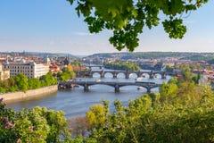Flod Vltava med broar i Prague, växter i förgrunden, Tjeckien Arkivbild