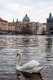 Flod Vltava Prague Arkivfoto