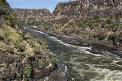 flod zambezi Royaltyfri Bild