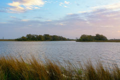 Flodarm Lafourche, Louisiana Royaltyfria Foton