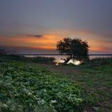 Flodbank Royaltyfri Foto