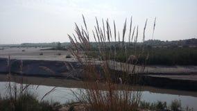 Flodbank Arkivbilder