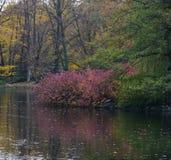 Flodbank i höst royaltyfria bilder