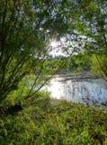 Flodbank som omges av frodig grön vegetation Royaltyfria Bilder
