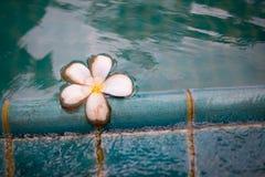 Flodblomma i pöl Royaltyfri Foto