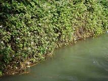 Floden Ak-Buura Arkivfoto
