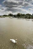 Floden Arun på Arundel västra Sussex Arkivfoto