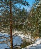 Floden av tid i julskogen royaltyfri bild