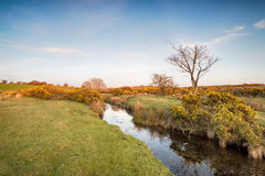 Floden De Stripig i Cornwall Arkivbilder