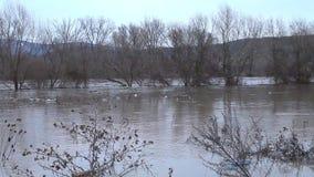 Floden, efter duscharna kom ut ur kusterna arkivfilmer