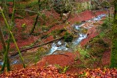 Floden flödar i en härlig höstskog royaltyfria foton