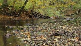Floden flödar längs den steniga kusten lager videofilmer