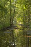 Floden flödar till och med den gröna skogen arkivbild