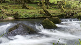 Floden Fowey, Golitha nedgångar, Bodmin hed, Cornwall, UK royaltyfri fotografi