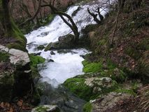 Floden Grza i Serbien Royaltyfria Bilder