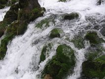 Floden Grza i Serbien Arkivbilder
