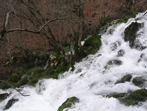Floden Grza i Serbien Royaltyfri Fotografi