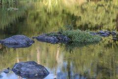 Floden i berget, marginaler med vaggar och vegetation royaltyfria bilder