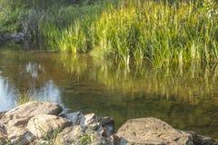 Floden i berget, marginaler med vaggar och vegetation arkivfoton