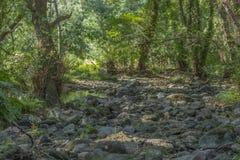 Floden i berget, marginaler med vaggar och vegetation arkivfoto