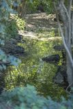 Floden i berget, marginaler med vaggar och vegetation arkivbilder