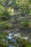 Floden i berget, marginaler med vaggar och vegetation royaltyfri fotografi