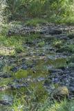 Floden i berget, marginaler med vaggar och vegetation royaltyfria foton