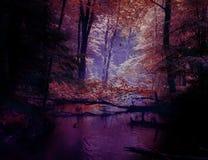 Floden i de mörka busksnåren av skogen för sagolikt magiskt foto för skog den dystra royaltyfria bilder