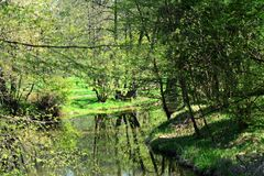 Floden i en gräsplan parkerar royaltyfria foton