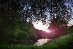 Floden i en tät skog tände vid strålar av solen Royaltyfria Bilder