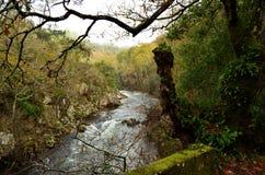 Floden i höst arkivbild