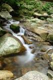 Floden i skogen Royaltyfri Fotografi