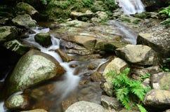 Floden i skogen Fotografering för Bildbyråer