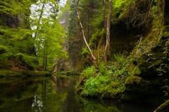 Floden i skogen royaltyfri bild