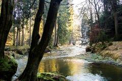 Floden i skogen Arkivbilder